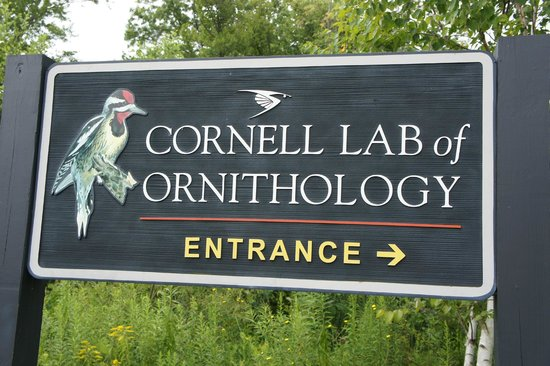 Cornell Lab of Ornithology: entrance sign