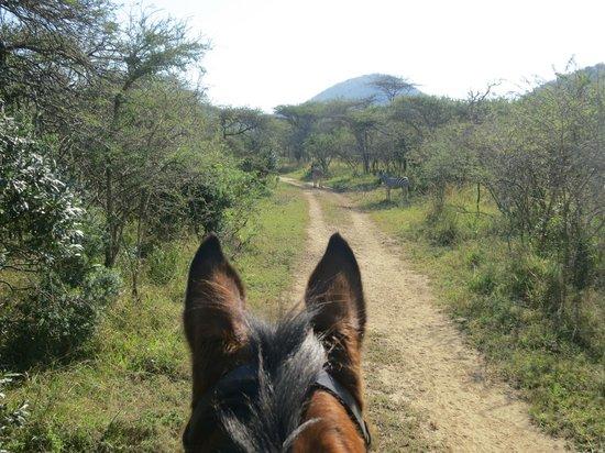 Pakamisa Private Game Reserve : beim Ausritt