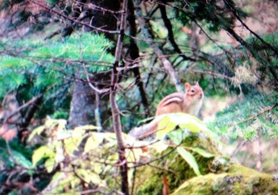 Domaine des Merveilles: Incroyable un p'tit écureuil pas craintif du tout