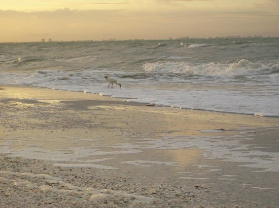 Song of the Sea: Gulf of Mexico
