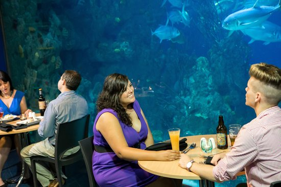 Two Rivers Restaurant: Couples enjoying their meal with views of the stunning Endless Oceans display
