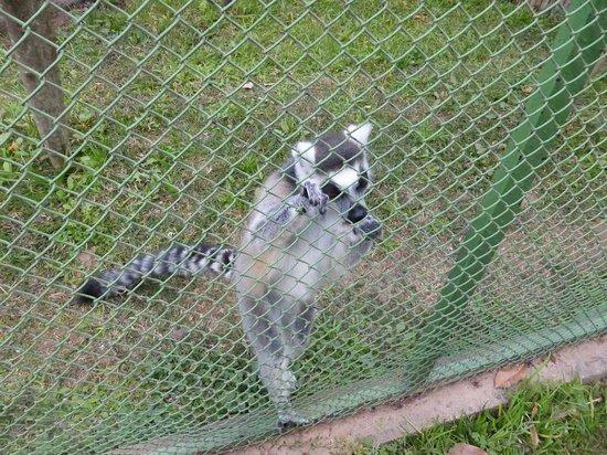 Tsimbazaza Zoo : Pauvre petit...