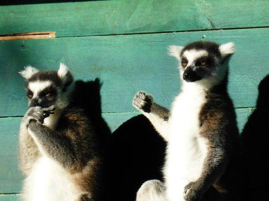 Tsimbazaza Zoo : Seuls au monde?