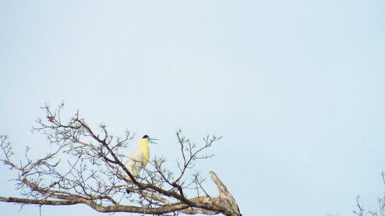 Tefe, AM : O pássaro mais lindo que já vi!