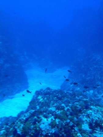 Silent World Divers: que padre azul