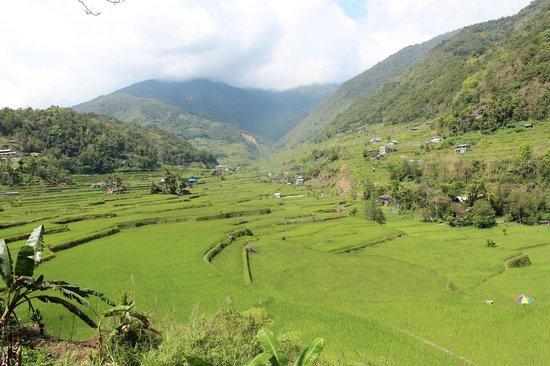 Hapao Rice Terraces: Hapao