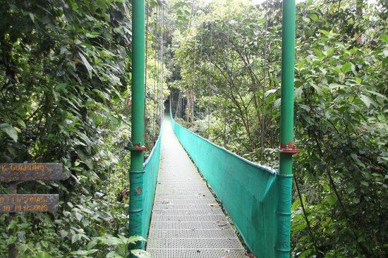 Arenal Volcano Inn : Hanging Bridges in La Fortuna