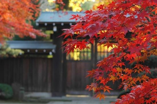 Niiza, Giappone: 紅葉の時期はとにかく人が多い。午前中がお勧めです。