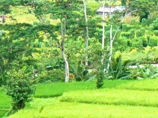 Subak Tabola Villa: View down the valley