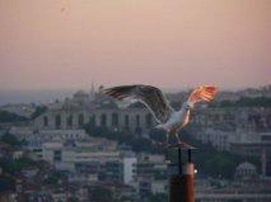Adahan Istanbul: ADAHAN terasta günü karşılıyoruz