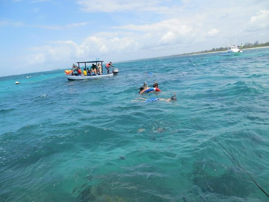 Turtle Bay Beach Club: Snorkelling