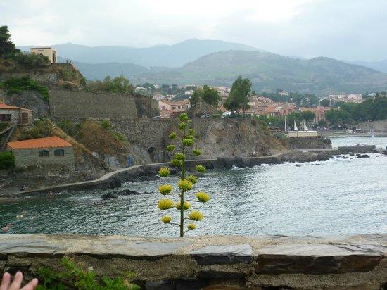 Les Caranques: Vue de la terrasse du chemin qui mène au centre de Collioure
