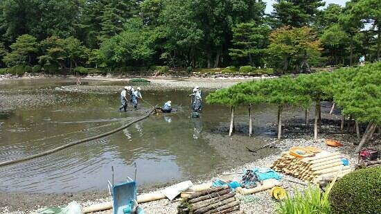 Kenrokuen Garden: 池の掃除してました。