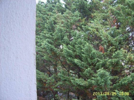 Hotel Le Biarritz: Bomen !