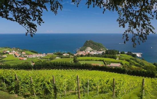Casa Rural Jesuskoa: Viñas de txakoli a 6 kmtros de la casa