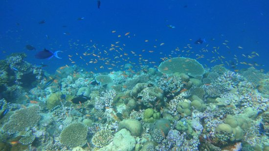 Sun Island Resort and Spa: We took the snorkeling trip and this is what we saw.