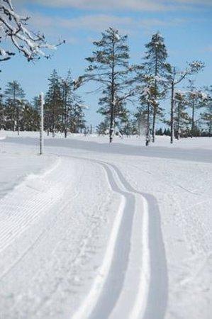Langberget Sporthotel: Fantastiska längdskidåknings spår