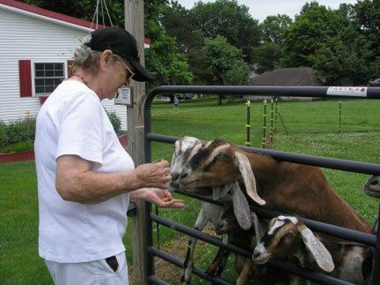 Quill Haven Country Inn: Mom feeding goats