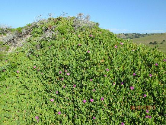 Sculptured Beach: flowers on the cliffs