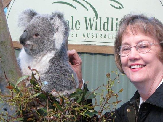 Sydney Wilderness Day Tours: Not so wild Wild Life