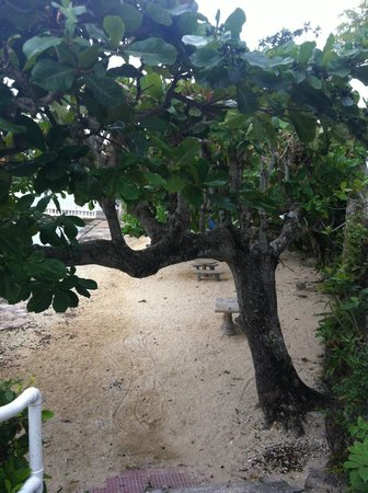 Silver Seas Resort Hotel: Under the Almond Tree - Perfect meeting place for Spice