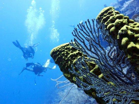 Hamanasi Adventure and Dive Resort: Dive adventures
