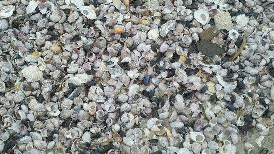 Walnut Beach: Walnt Beach