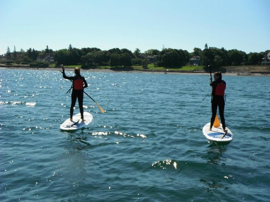 Acadia Stand Up Paddleboarding: Paddleboarding in the ocean