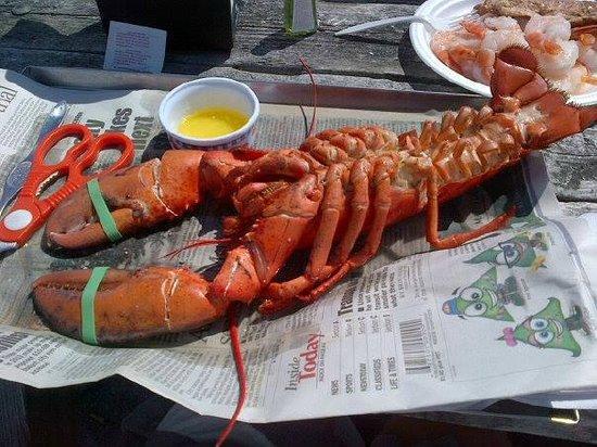 Alma Lobster Shop: 2lb lobster! yum!