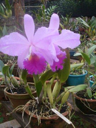 Hotel Chiquitos: Orquídea