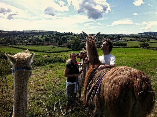 UK Llamas: Why would you not want to do this!