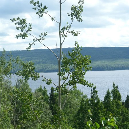 Quality Hotel & Suites: View from our room of Lake Gander