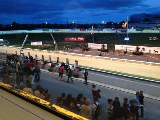 Shelbourne Park Greyhound Stadium: getting ready for race nr 7 of the evening