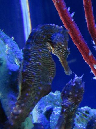Neon Fish Picture Of Loveland Living Planet Aquarium