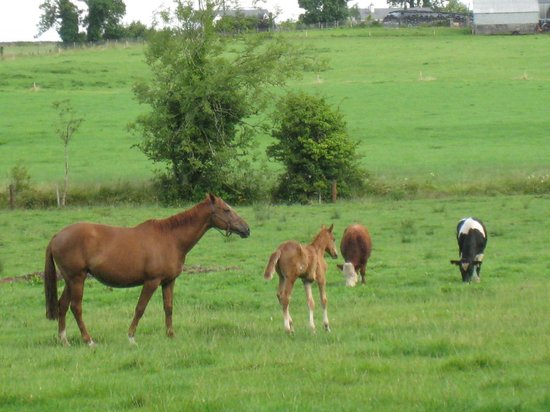 Cahergal Farmhouse: Beautiful horses!