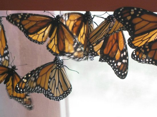 Bear Mountain Butterfly Sanctuary: Tons on butterflies, flying freely around you in a room.  Pretty amazing.