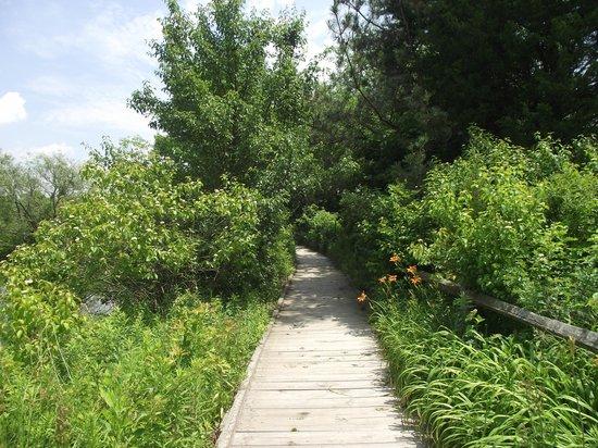Great Swamp National Wildlife Refuge: boardwalk trail