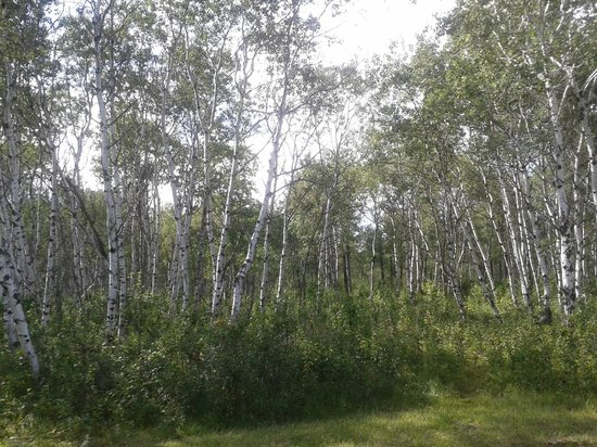 Ramada Yorkton: Good Spirit provincial park - lovely birchwood forests