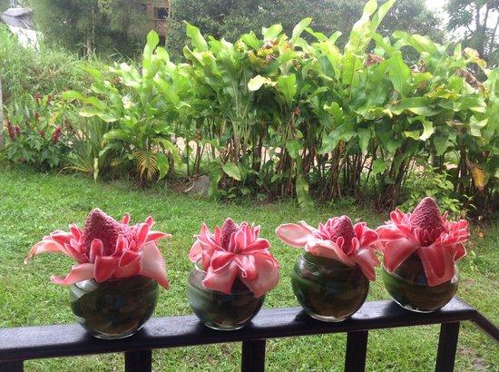 Casa de Piedra: Beautiful & exotic flowers