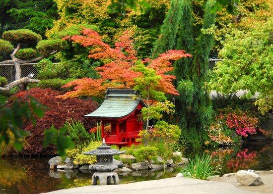 Koi pond foto di point defiance park tacoma tripadvisor for Koi pond traduzione