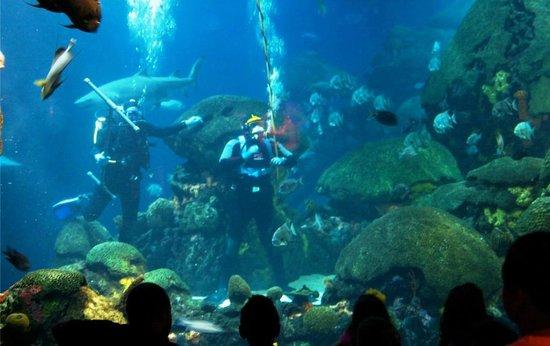 Ocean Adventure Shark Picture Of Tennessee Aquarium