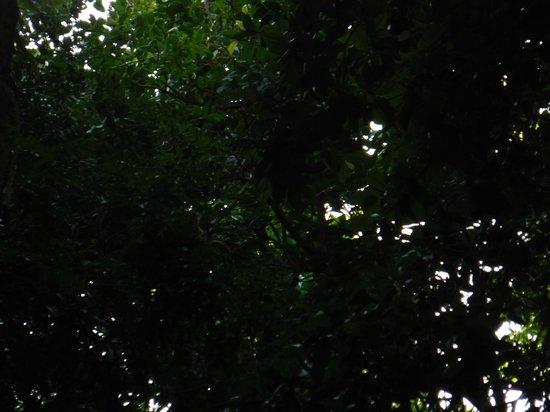 Iberostar Tucan Hotel: Monkeys somewhere up there