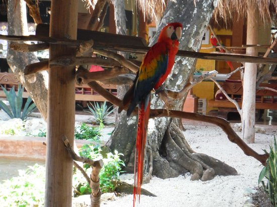 Iberostar Tucan Hotel: Beautiful bird in the front lobby