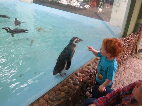 Zoo Pomerode: Será que dá pra pegar no pinguim mãe?