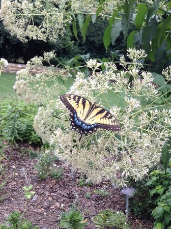 JC Raulston Arboretum at NC State University: Butterflies and bees all abound