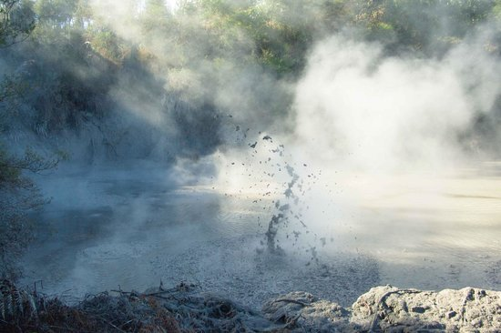 B&B @ The Redwoods: Boiling mud, light, and steam at Wai-0-Tapu