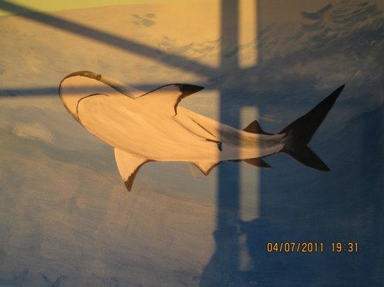 Diamond Red Sea Divers: shark on the wall