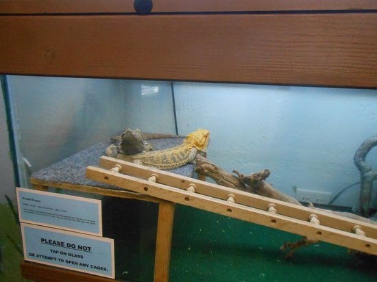 Bremerton Bug Museum : Lizards too in the Reptile Room