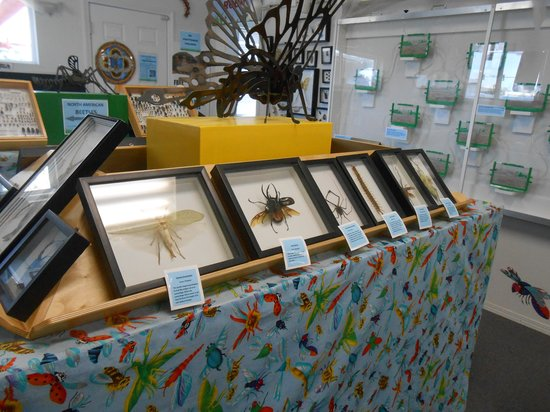Bremerton Bug Museum : Exotic bugs