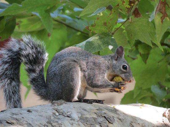 Circle Bar B Guest Ranch: Wonderfl wildlife